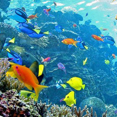 aquarium nigeria