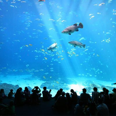 aquarium deep