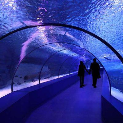 aquarium purple