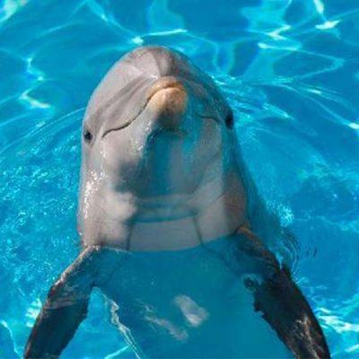 aquarium dolphin