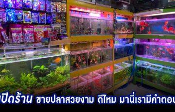 Fish Shop 1